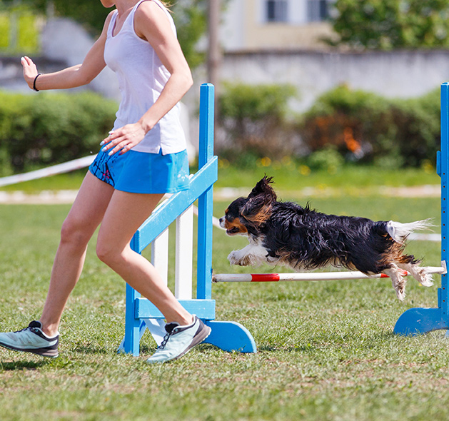 Dog Agility Training: Fountain Inn, SC | Dog Trainers Workshop - agility1