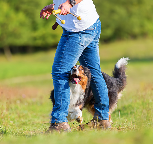 Competitive Dog Training: Fountain Inn | Dog Trainers Workshop - comp1